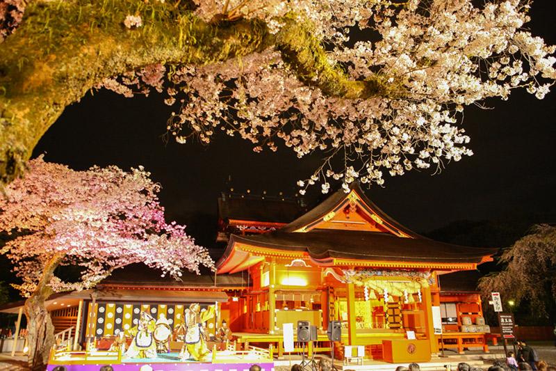 浅間大社 桜花祭